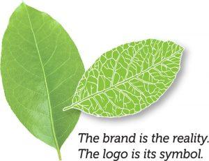 Brand before logo